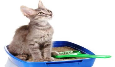 cat-poop-cancer-treatment