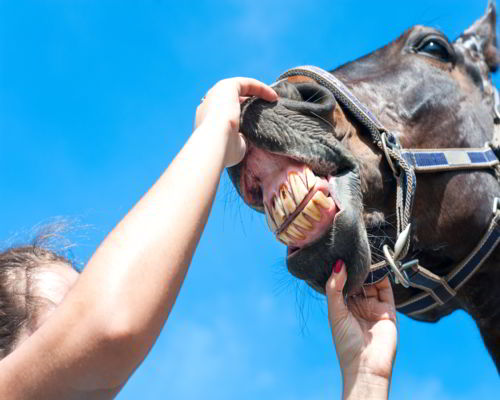 Horse-Cancer-Any-Medical-Clues-For-Us-Humans