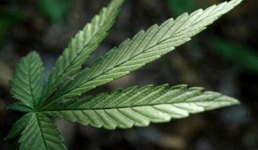 medical cannabis oil anti cancer australia cbd oil sydney
